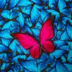 Complexiteit en Zorg. Tijd voor herdefiniëring begrippen?